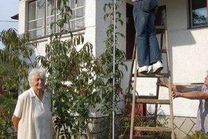 Gigantická ruža. Vyrástla v záhrade M. Pankuchovej. Jej vnuk nameral 367 cm.