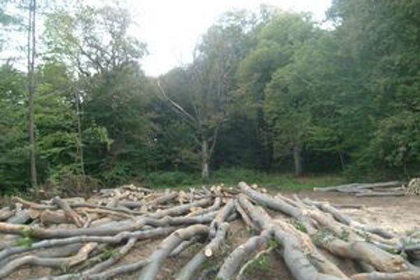 Audit odhalil podozrenia. Po ťažbe sa vraj strácala drevná hmota.