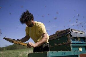 Včelári by mohli v budúcnosti robiť menej tendrov.
