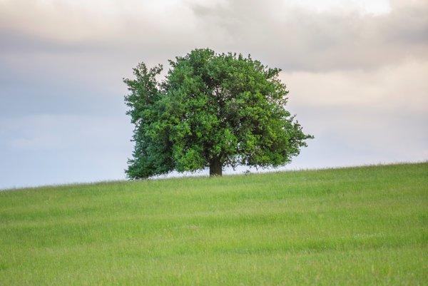 Stodvadsaťročná hruška planá z Lovčice-Trubína bojuje o tiul Strom roka.