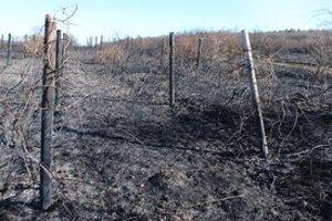 Zhorené vinice. Požiar zničil vyše 5 hektárov neobrobených tokajských viníc. Dobrý vinič sa podarili zachrániť.