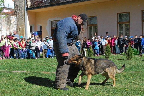 Policajný pes. Zlodeja pustil až na rozkaz.