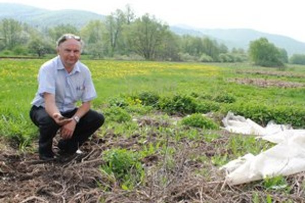 Predseda M. Šmíro. Pri kontrole biohumusu  vyrobeného dážďovkami.