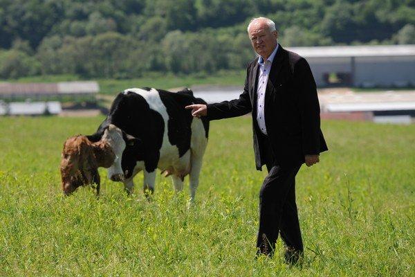 Predseda družstva Ján Harvilko pri krave s nedávno narodeným teliatkom.