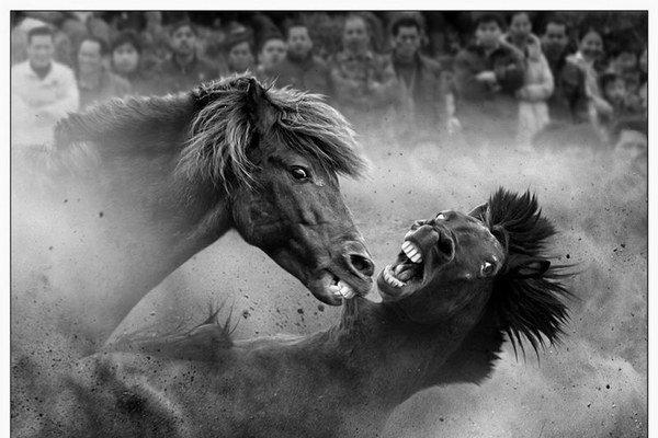 Tam Joseph, Australia, Fighting Horses