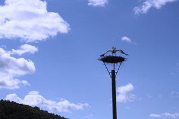 Bociany. Vrátili sa na svoje hniezda a po príchode teplejších dní už môžu zahniezdiť.