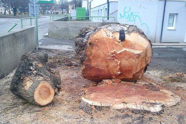 Vyzerá toto ako spráchnivelé achoré? Kmeň spíleného stromu.