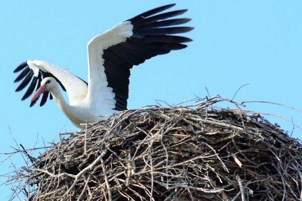 Bocianie hniezdo váži aj do 500 kg.