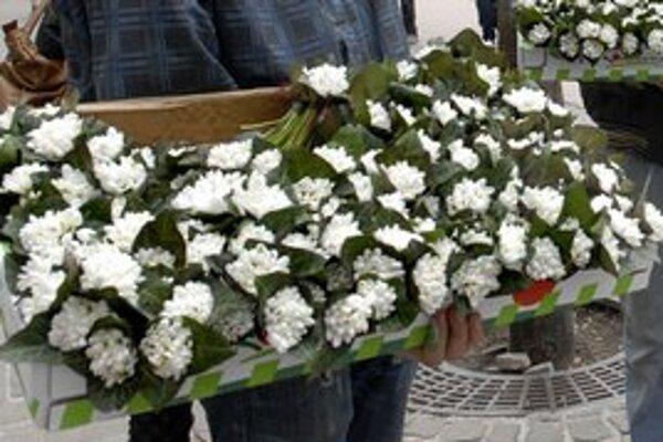 V zmysle zákona o ochrane prírody a krajiny snežienka nie je chránenou rastlinou, ktorú je zakázané trhať alebo zbierať v jej prirodzenom areáli vo voľnej prírode.
