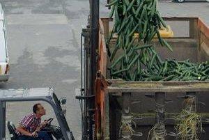 Strach ľudí z nakazenia prinútil producentov zeleniny znižovať ceny na kritické minimá.