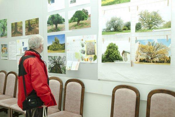 Výstava stromov zo Zemplína. Pre človeka majú nenahraditeľný význam.