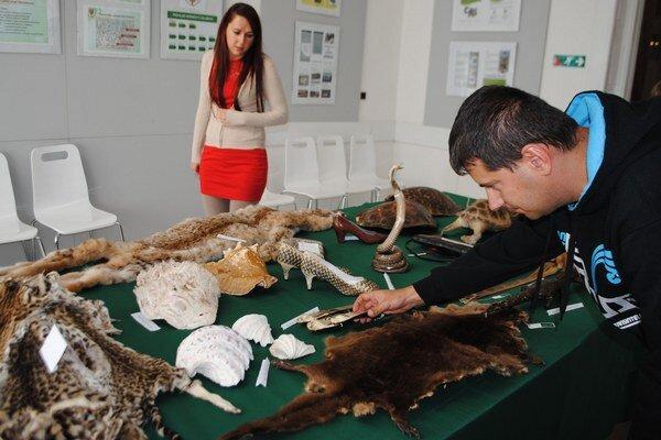 Netradičná výstava. Colníci na nej prezentovali zadržané výrobky zo slonoviny, kožušiny mačkovitých šeliem aj kože plazov.