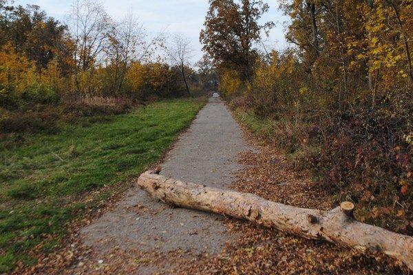 Les Biela hora. Zraneného 42-ročného Milana B. našla náhodná Michalovčanka na tejto ceste, keď venčila psíka. Muž o niekoľko dní zomrel v nemocnici.