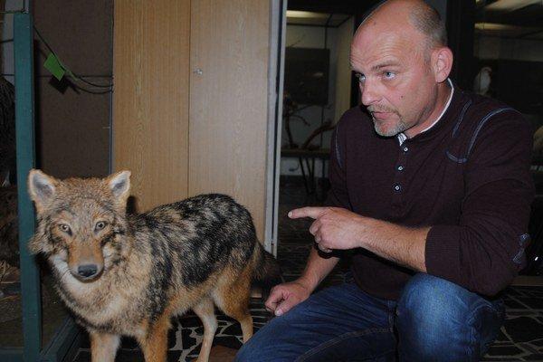 Zoológ Tibor Vongrey sa venuje pozorovaniu šakalov už niekoľko rokov. Hovorí, že natrafiť v Zemplíne na psovitú šelmu, ktorej pôvodným domovom bola severná Afrika, už nie je žiadna rarita.