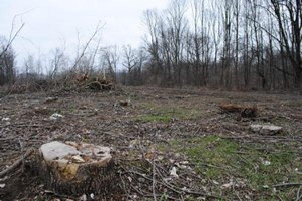 Vyrúbaná časť lesa. Vlastníci pozemkov chcú v lokalite stavať domy. Mesto už raz ich zámer odmietlo. Vlastníci to skúšajú znova.