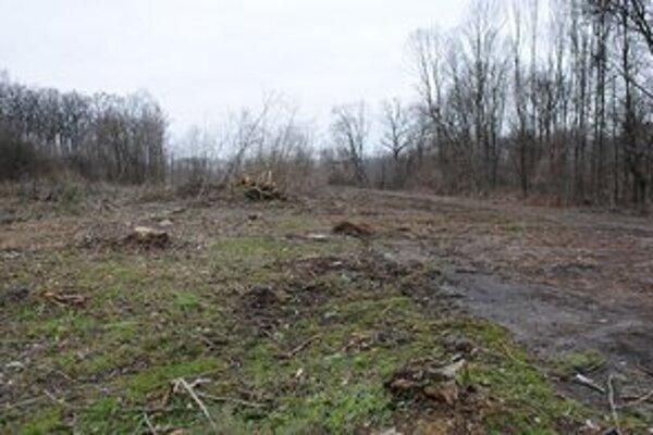 Po výrube. Vlastníci pozemkov sú povinní zabezpečiť náhradnú výsadbu.