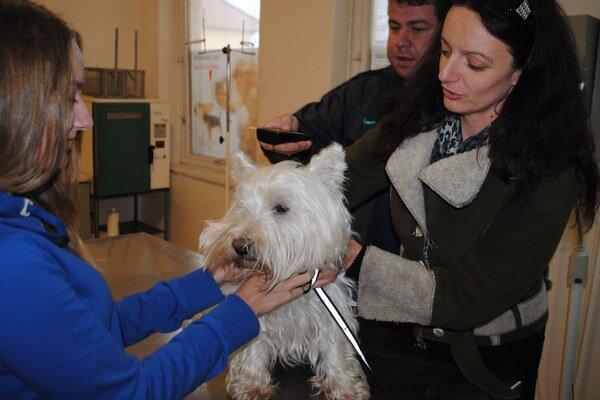 Čipovanie. Majiteľov psov, mačiek a fretiek vyšlo v Michalovciach na 10 eur.