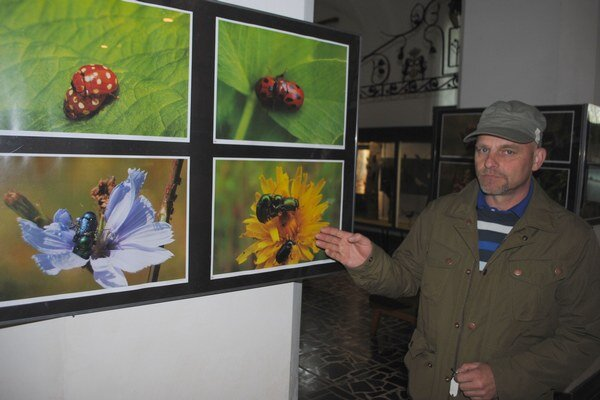 Výstava Sex v tráve. Na farebných fotografiách sú detailne zachytené pohľady na intímny život hmyzu.