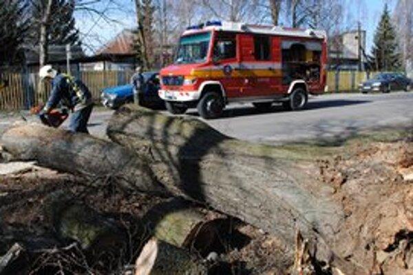 Strom na ceste. Spadol priamo pred auto na priechod pre chodcov.