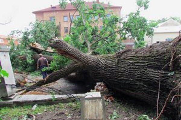 Ničivá búrka. V júni jej padol za obeť aj tento vyše 200-ročný dub.