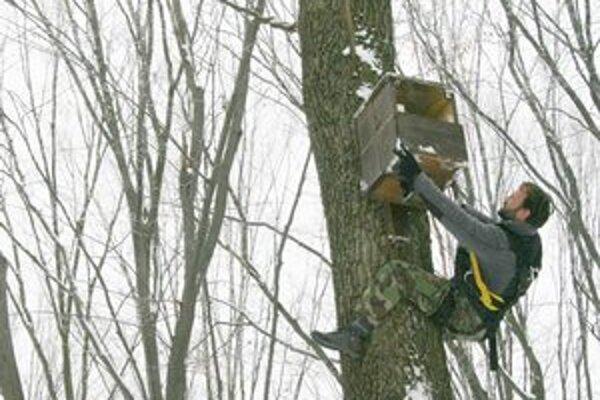 Búdky pre sovy. Ornitológovia a ochranári ich umiestnili v oblasti Vihorlatu.