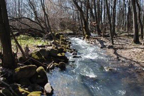 Zdržovanie a zhromažďovanie zrážkových vôd zabezpečuje podľa ochranárov prirodzený les bez holorubov.