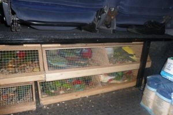 Papagáje napchali do drevených klietok, ktoré vodiči skryli pod sedadlá svojich dodávok vedľa toaletného papiera.