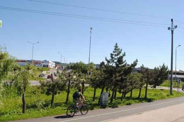 Odrezané vrcholy stromov. Špatia ulice v Spišskej Novej Vsi.