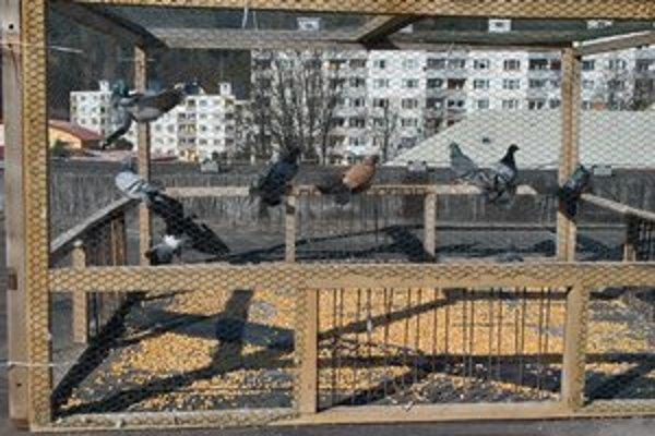 Klietka v centre. Po pár dňoch sa v nej uväznila asi desiatka holubov.