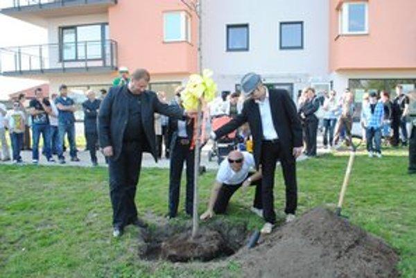 Prvý  stromček. Obyvatelia zasadili javor pred svojou bytovkou.