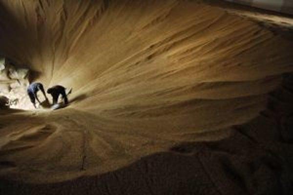 Balenie pšenice do vriec.