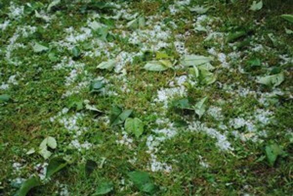 Ľadovec. V záhradkách zničil takmer celú úrodu.