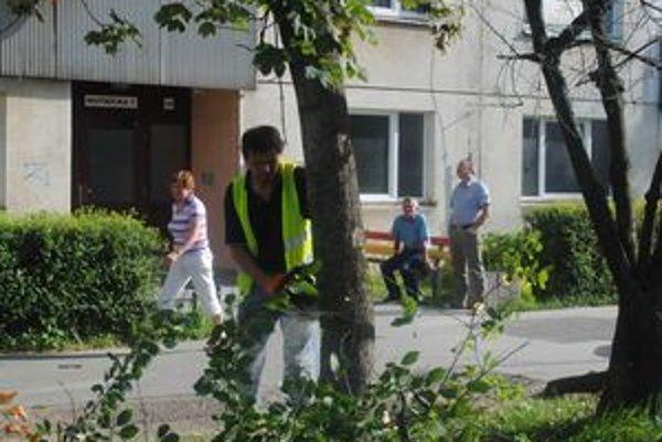 Prizerali sa. Pílenie stromov sledovali aj obyvatelia sídliska, názory sa rôznili.