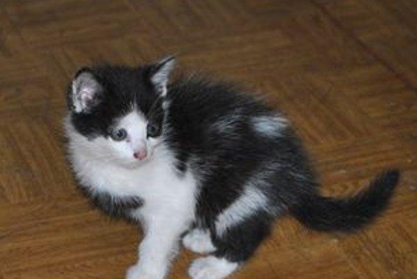 Bojazlivé. Mačiatko dnes už vyzerá lepšie, ešte vždy je však plaché a ľudí sa bojí.
