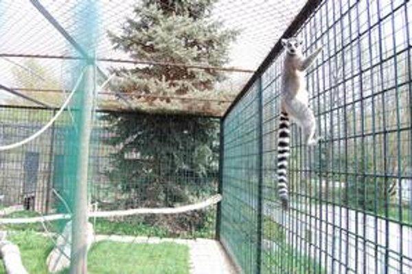 Zoo v Spišskej Novej Vsi. Oslávi dvadsiate narodeniny.