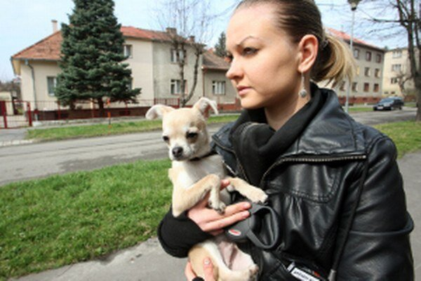 Každý pes by mal byť evidovaný na mestskom alebo obecnom úrade.