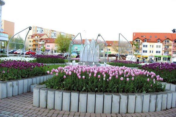 Tulipány nie sú len na námestí. Zdobia aj popradské sídliská.