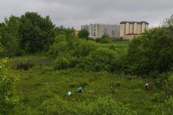 Rašelinisko pri popradskom sídlisku Juh III.