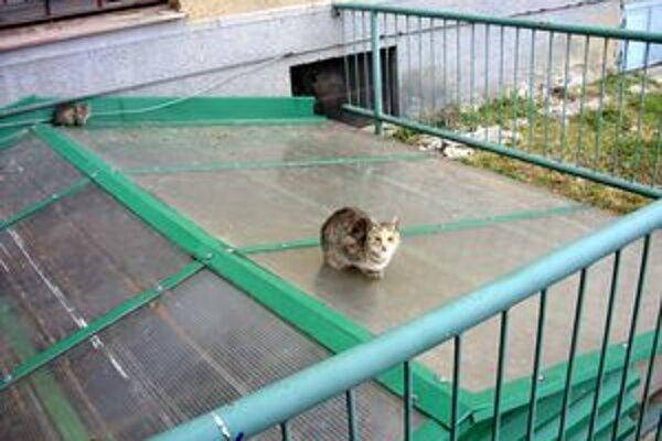 Túlavé mačky. V Poprade ich stretnete takmer všade.