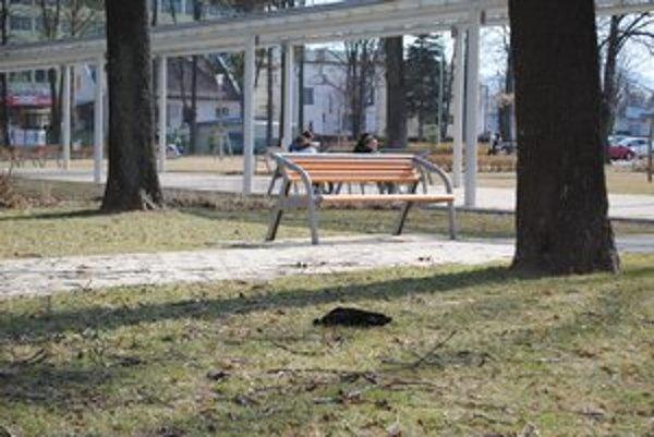 Žalostný pohľad v parku. Okoloidúci boli úhynom vtákov zhrození.