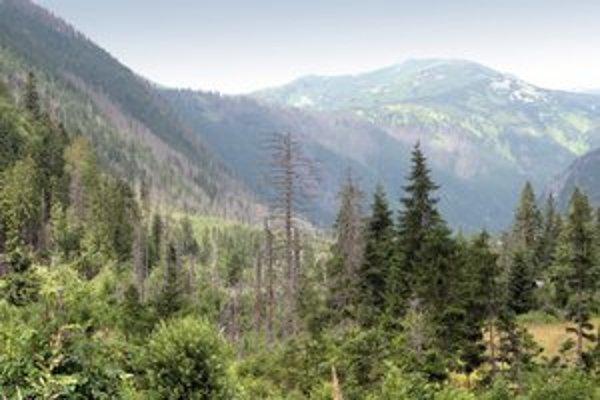 Postihnutý tatranský les.