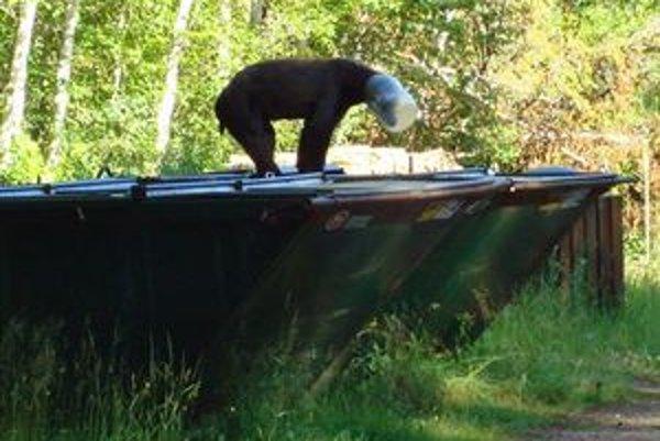 Tzv. kontajnerové medvede sú v tatranskej oblasti stále vážnejším problémom.