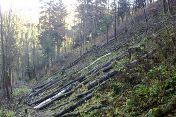 Polámané stromy narobili problémy najmä v okolí Mníška nad Popradom.