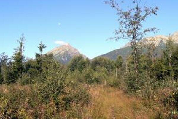 Stopy po traktoroch miznú. Tatranský les je krásny v akejkoľvek podobe, stále žije a vyvíja sa.