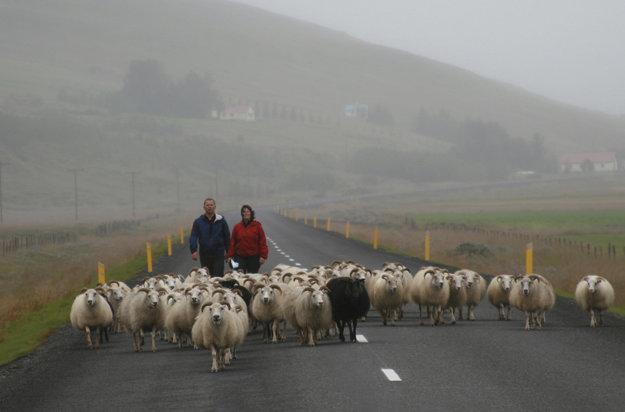 Ovce sa tu voľne prechádzajú.