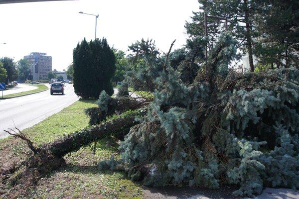 Vyvrátený strom po silnom prívalovom daždi v Komárne