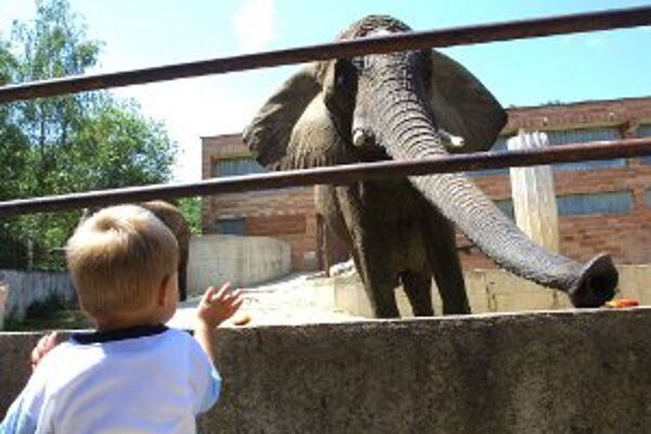 Letnú sezónu otvorili v bojnickej zoo 1. mája.