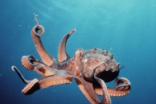 Chobotnice patria k najplachejším živočíchom sveta.