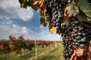 Na farme v Ľupči si môžete vychutnať kvalitní vínka a jesenné špeciality.