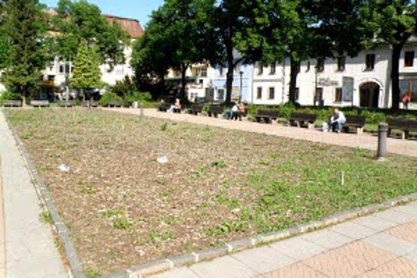 Ešte minulý týždeň bola v centre Prievidze za pamätníkom v záhone len burina.